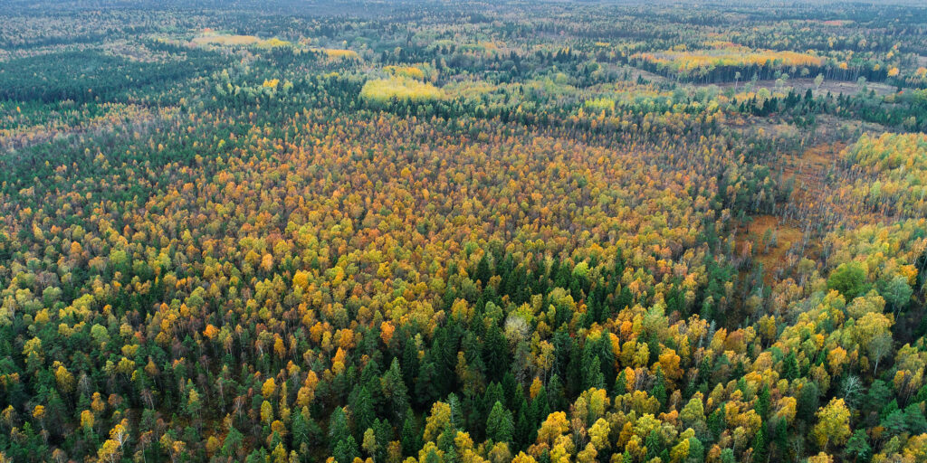 Metsa ost, Metsamaa ost